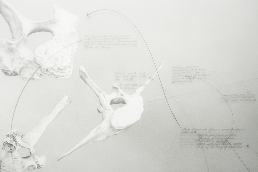 A detail of a grayscale graphite drawing on white vellum and paper, image of multiple horse bones arranged all over the frame with small paragraphs of text. By Nate Young, titled Divining Number 1. Image courtesy of Monique Meloche Gallery.