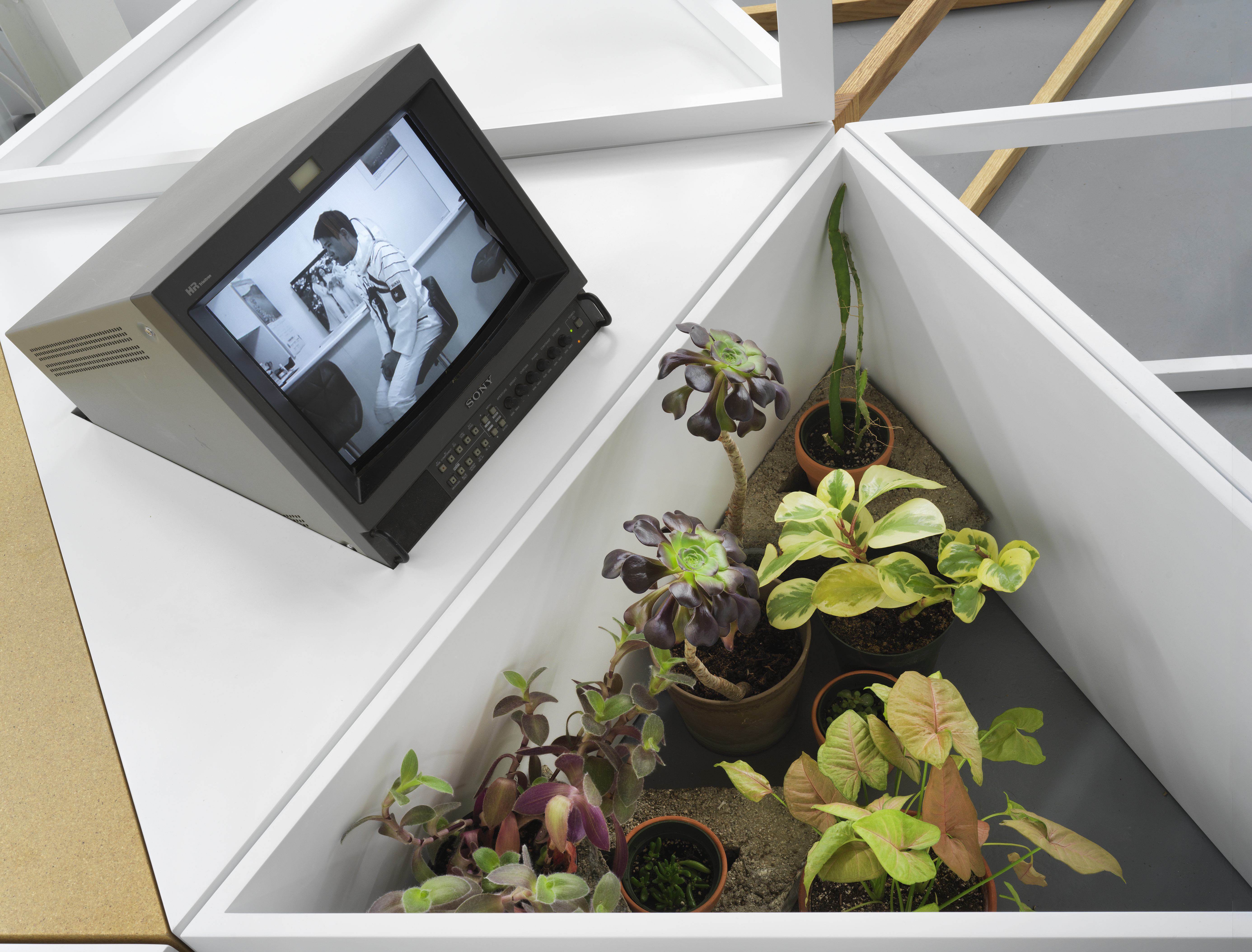 Image: A closeup photo taken from above of the wooden triangle segments holding various potted plants with green, purple, and yellow leaves. A small, grey television is set on top of a neighboring triangle segment. The TV screen is tilted upwards and shows a black and white image of a cosmonaut sitting sideways on a chair in a space suit without a helmet. Image courtesy of the artist.