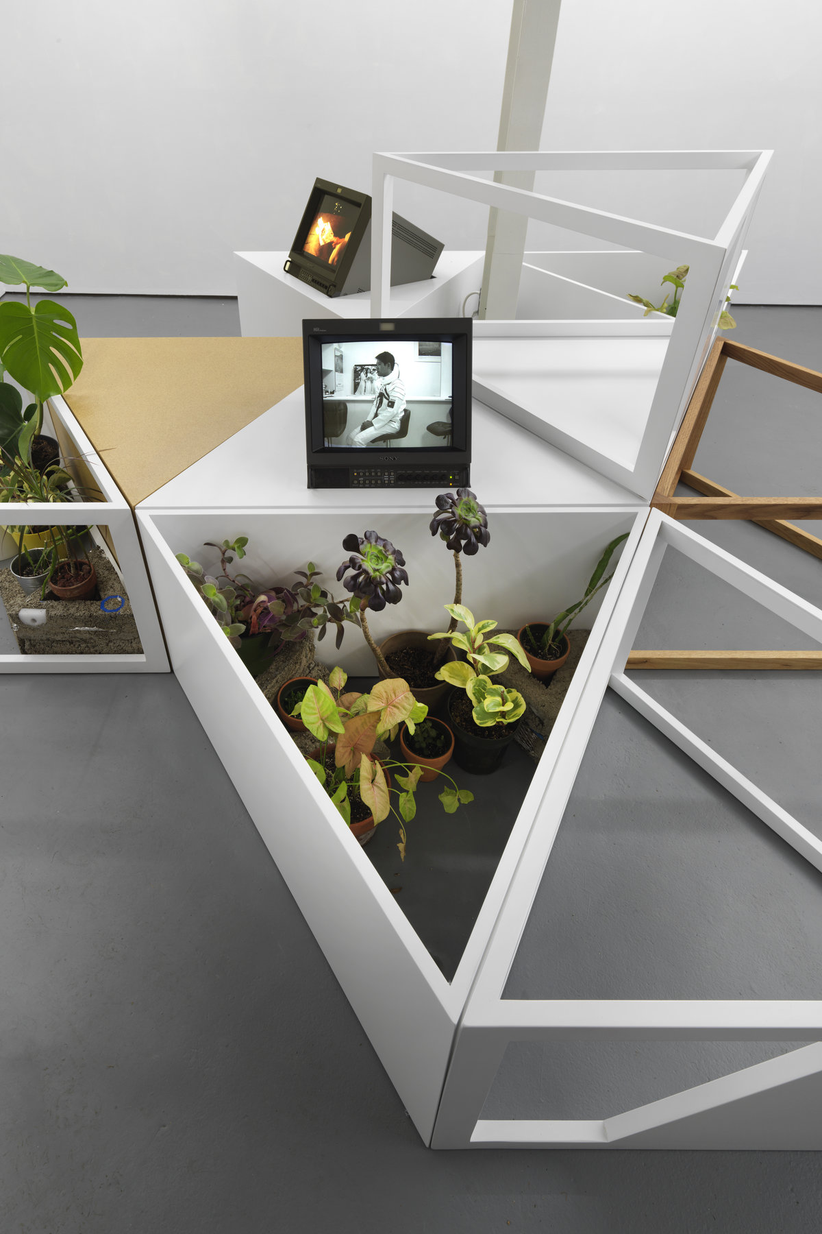 Image: Several small plants in a large triangular planter with a TV screen overhead. Photo by Reuben Westmaas.