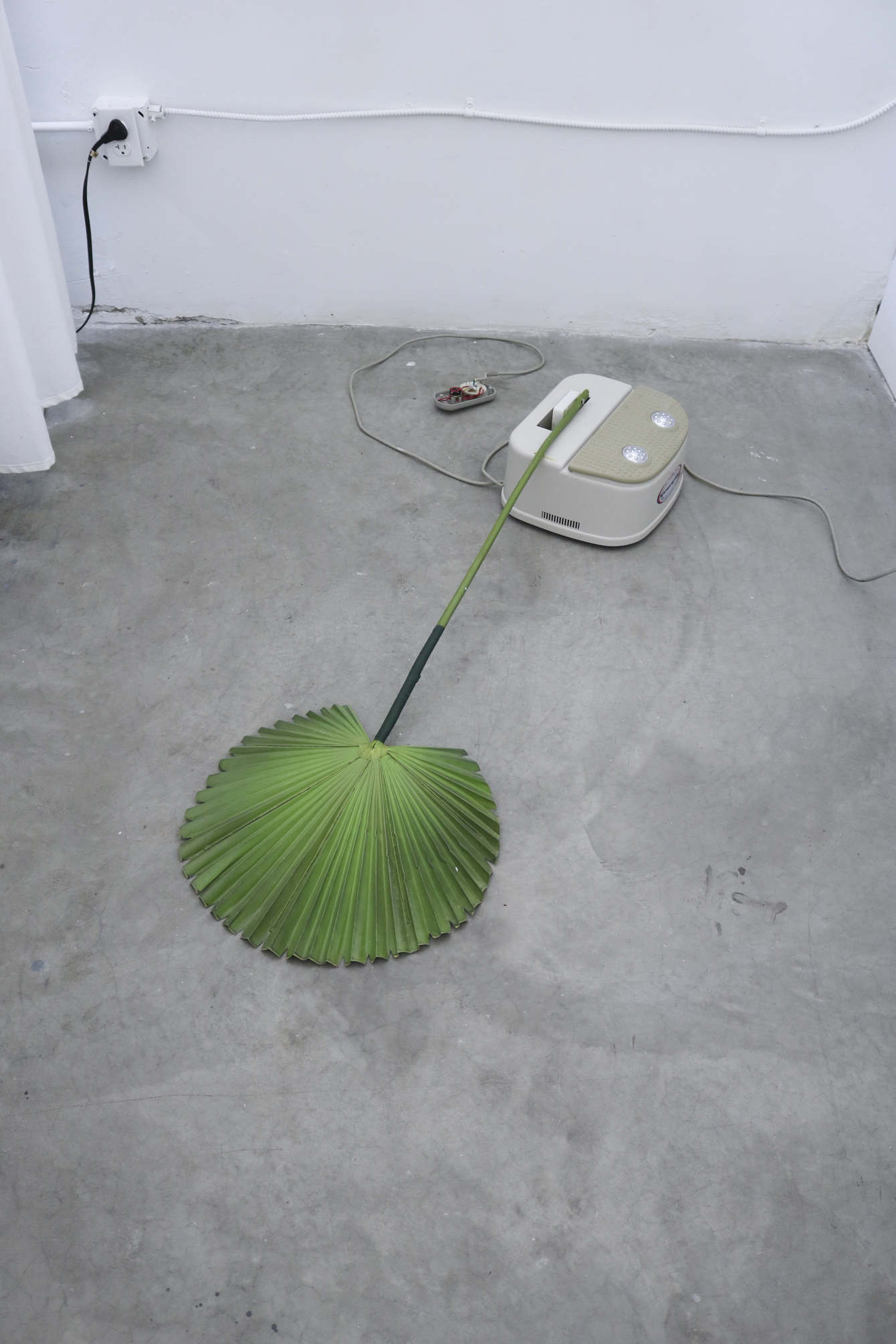 Rachel Youn, Devotee, 2019. Chi swing, artificial fan palm, and motion sensor. Photo courtesy of the artist.