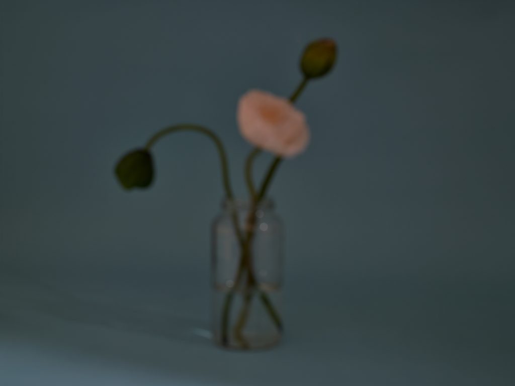 Image: Magenta, 2019 by Marzena Abrahamic. A photograph that is out of focus of three flowers in aa glass vase. The one open flower is pink and the background is dark, pale blue. Image courtesy of the artist.