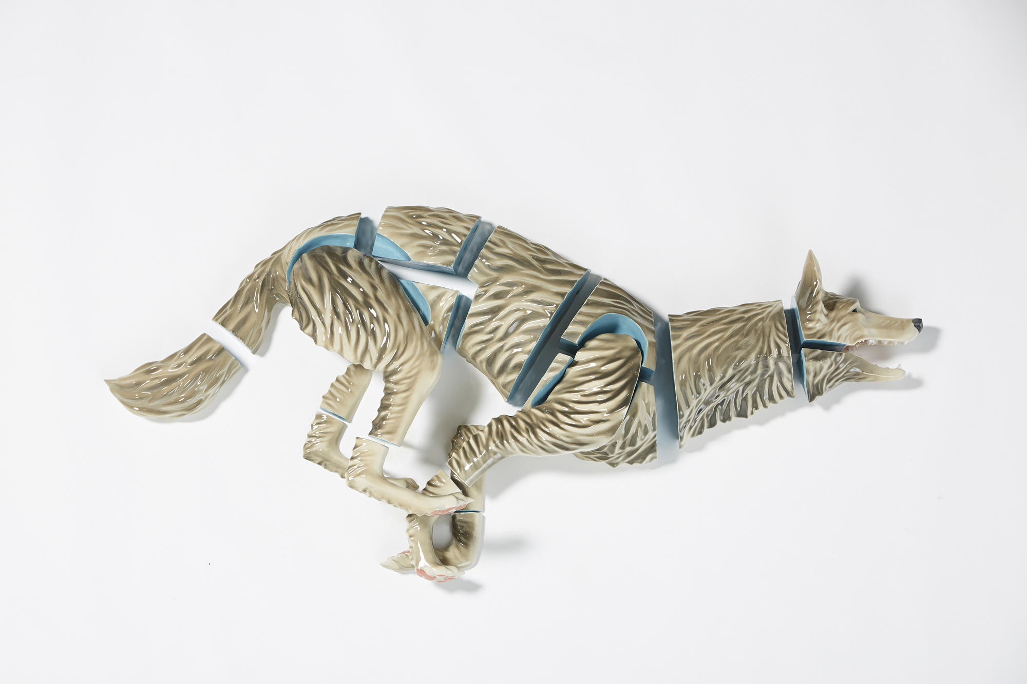 Emmy Lingscheit, Canis Latrans Subdivision I, cast vitreous china, glaze, dimensions variable, 2015. A sculpture of a wolf seen from the side, face to the right side of the image. The wolf appears to be running, its four legs together coiled in potential movement. The sculpture consists of several pieces that are slightly spaced apart. The fur of the wolf is glazed in brown-gray and whites. The areas of the sculpture that should be touching are glazed in blue. Photo courtesy of Emmy Lingscheit.