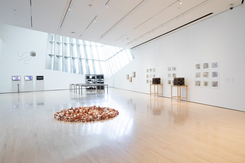 Seeds of Resistance installation view at the Eli and Edythe Broad Art Museum at Michigan State University, 2021. Photo: Eat Pomegranate Photography. Image courtesy of the museum.