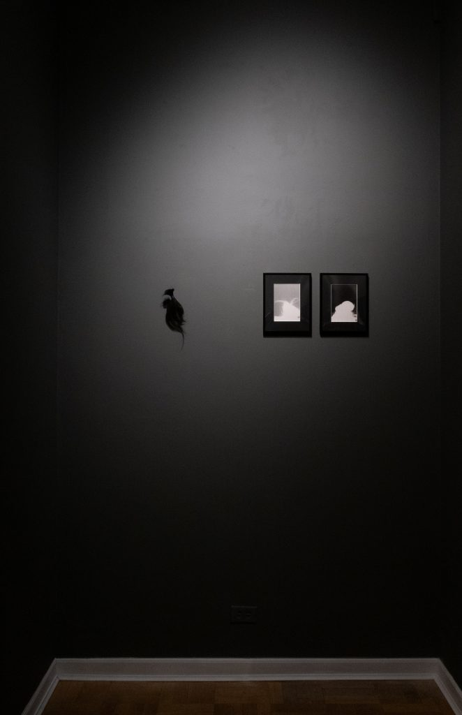 Image: An installation view of Kioto Aoki's work installed among the objects within the collection at the International Museum of Surgical Science as part of the exhibition Breathe, Fibers of Papers Past. The photo shows three pieces hanging on a dark grey wall. The two pieces on the right are black and white, abstract photographs. The piece on the left is black and abstract. Courtesy of the artist.