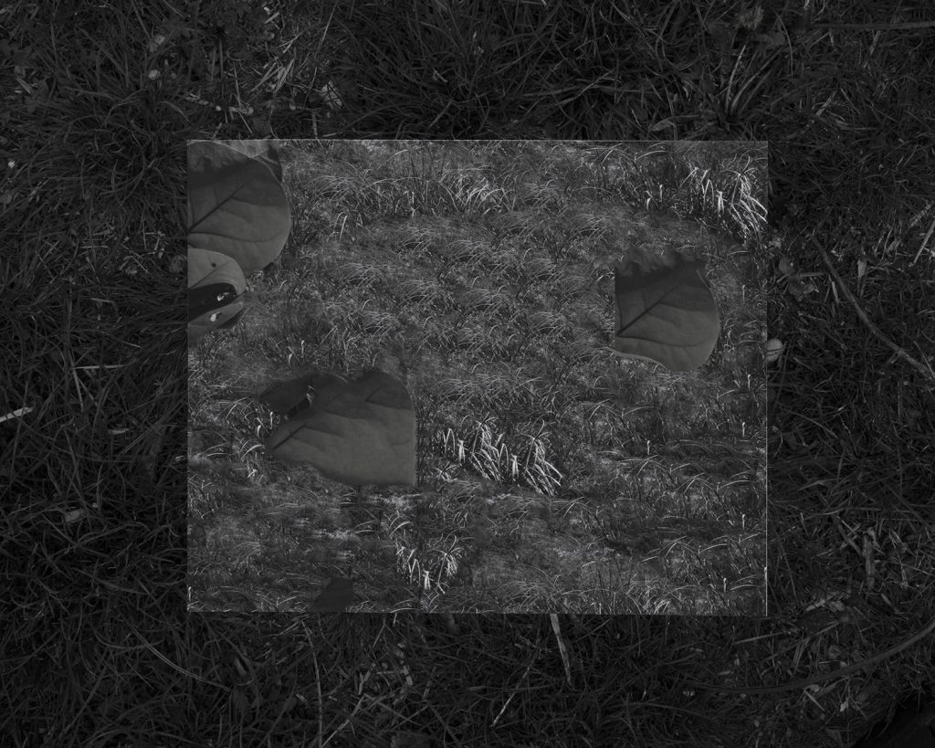 """Image: Kelly Kristin Jones, """"Untitled (The plague),"""" 2021. Archival pigment print, 16in x 20in. Edition of 3. A black and white photograph looking down at the grass. A square shape lies in the center showing more grass and leaves. Image courtesy of the artist."""