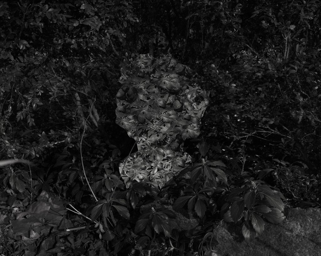 """Image: Kelly Kristin Jones, """"Untitled (Winter Solstice II),"""" 2021. Archival pigment print, 16in x 20in. Edition of 3. A black and white photograph showing leaves and plant life. In the center is a ghostly shape of a bust. Image courtesy of the artist."""