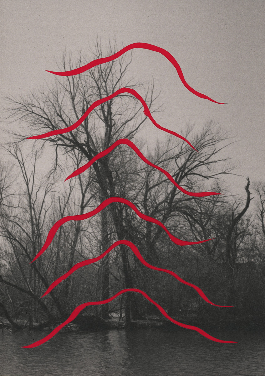 A black and white photograph of trees with no leaves alongside a lagoon of water. There are six cut out lines colored red moving across the image. Image by Ryan Edmund Thiel.